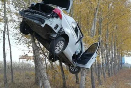 """本田轿车开启""""飞树模式""""  交警惊呆了"""