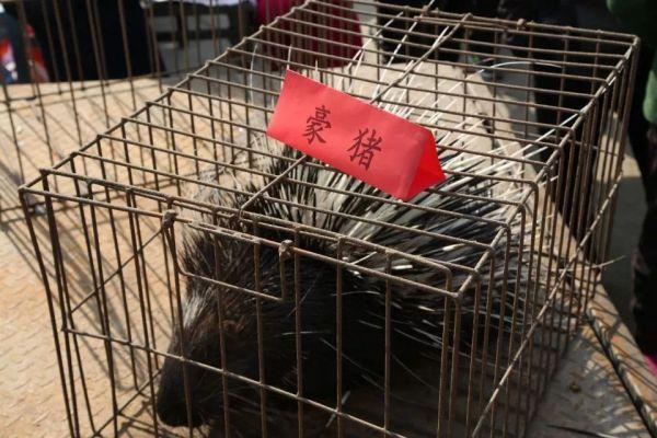 """""""随着一声叫喊,放在笼子里的豪猪引来了游客们的围观.图片"""
