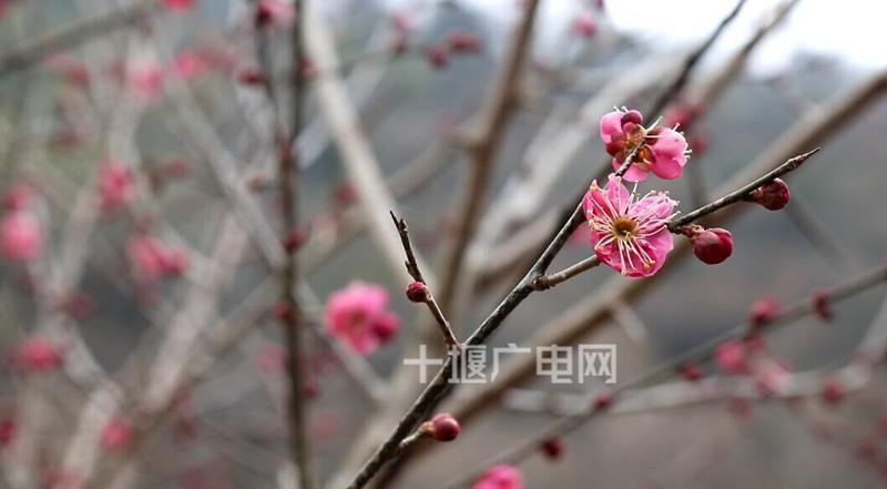 QQ图片20180305095748_副本_副本