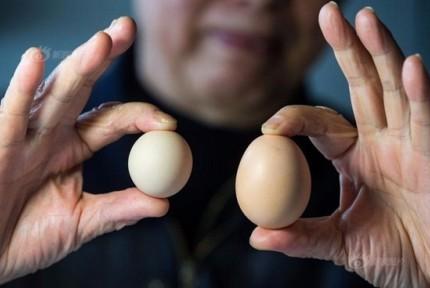 稀罕!这枚鸡蛋出现概率仅十亿分之一