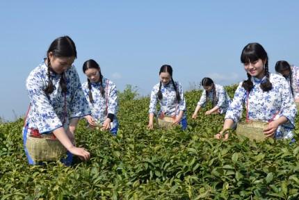 十堰这个品牌获第二届中国国际茶业博览会金奖