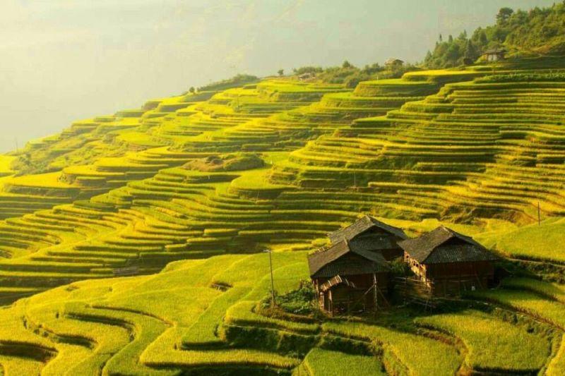 包括东,西峰林,景观各异 贵定县盘江镇音寨村,每到春夏,油菜花好似