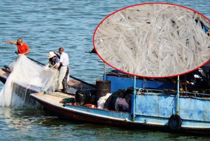 汉江野生银鱼丰收 渔民一天收入数千元