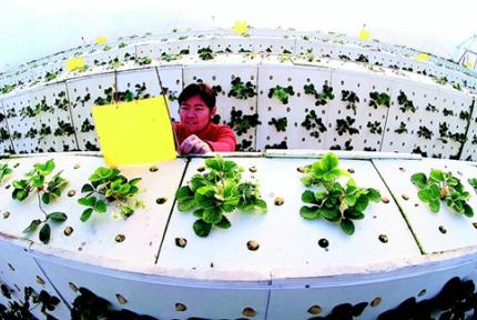 """""""科技农业""""助农民增收"""