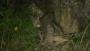 竹山这些人接力救助受伤斑羚 国家二级保护动物重返大自然