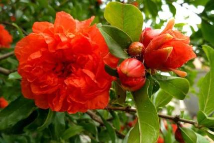 这4类植物评选为十堰市市树、市花,你赞同吗?