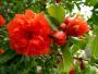 这4类植物评选为亚博市市树、市花,你赞同吗?