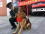 汶川地震最后一只搜救犬去世,曾救出15位地震幸存者