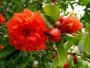 官宣!十堰市树、市花确定,你对它们了解多少?