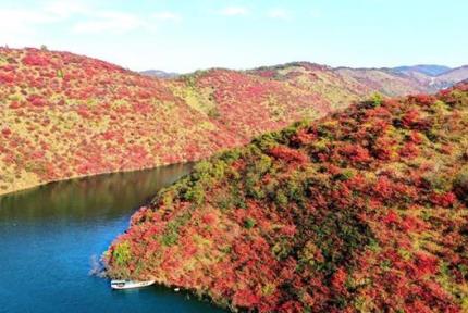 紅葉照碧水 青松舞群山 丹江口彩山美景如畫