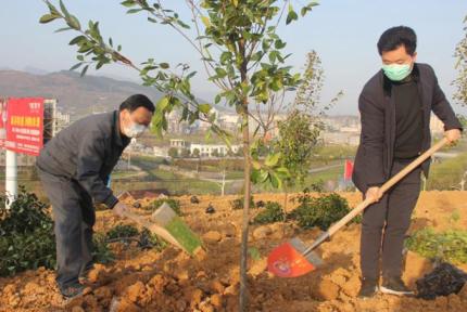 十堰掀起植樹熱潮 將完成人工造林13.21萬畝