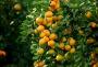 十堰四条柑橘采摘路线推荐给你,甜蜜之旅,周末走起!