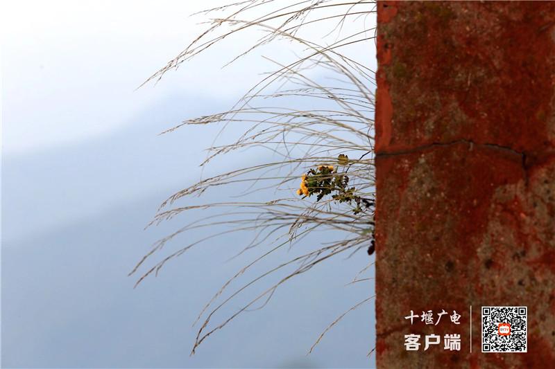 微信图片_2020111110270012_副本