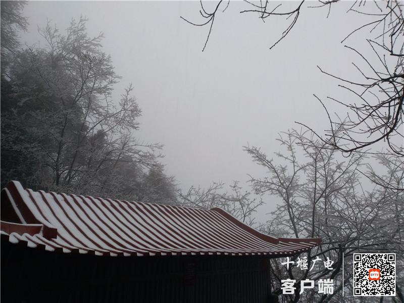 QQ图片20201121174115_副本1