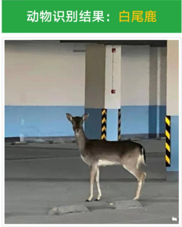 《【杏耀平台app登录】神秘动物闯入十堰一地下停车场,你认识它吗?》