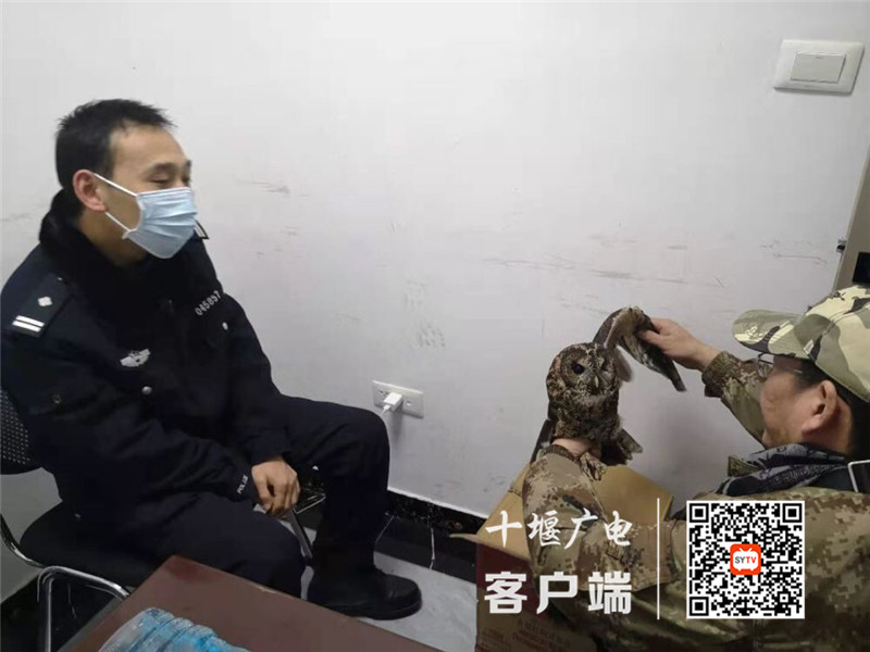 """《【杏耀平台登录地址】""""砰""""!猫头鹰居然撞墙上了,晕倒在十堰一学校值班室》"""