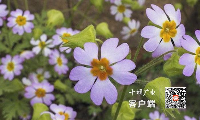 《【杏耀平台手机版登陆】世界野生动植物日来了,越来越多的国家级保护动物在十堰现身》