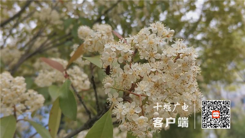 QQ图片20210421141154_副本