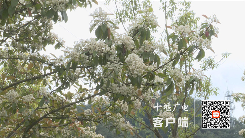 QQ图片20210421141214_副本